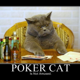 Poker chat et alcool